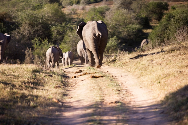 bloved-uk-wedding-blog-garden-route-honeymoon-travel-riverbend-lodge-addo-elephant-park-part-2©blovedweddings (5)