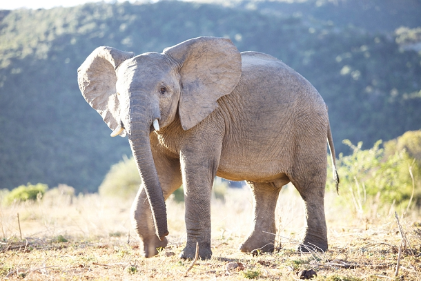 bloved-uk-wedding-blog-garden-route-honeymoon-travel-riverbend-lodge-addo-elephant-park-part-2©blovedweddings (8)