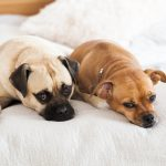nursery photography session with pet family dogs