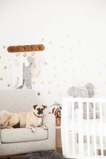 nursery decor inspirations with modern style and pet dog
