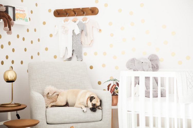 modern nursery decor inspiration and pet dog