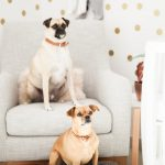 family pet dogs and nursery tour photo session