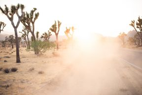 dust in the air by the joshua trees