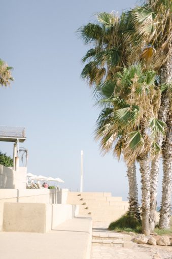 palm trees and exploring surroundings of Alexander the Great Hotel