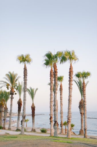 tall palm trees in the sunshine