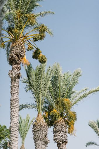 magnificent palm trees in the grounds