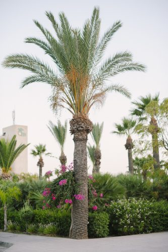 palm trees in the gardens with pink flowers trailing
