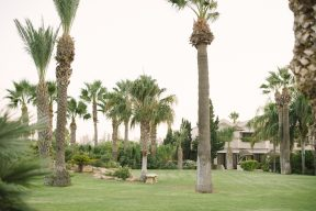 palm trees and grounds of the hotel
