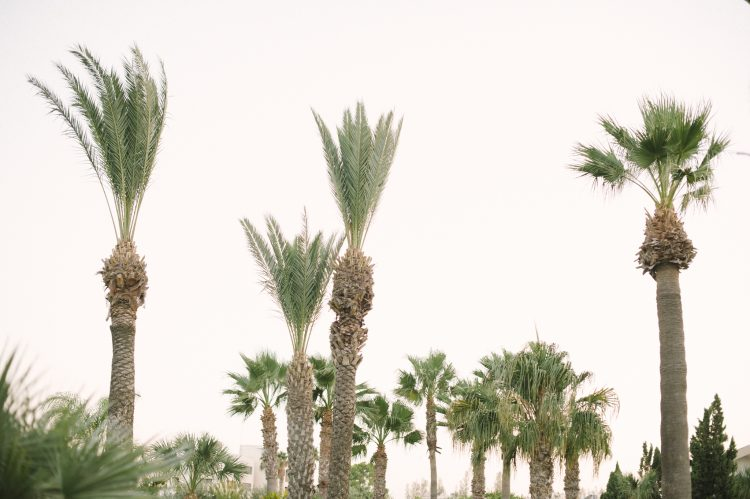 lots of palm trees by the The Palm Beach Hotel & Bungalows