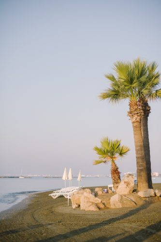 rocky coastline and palm tree by the hotel