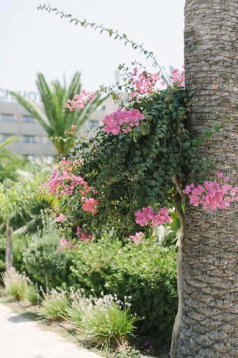 beautiful exotic pink flowers in the gardens of the hotel