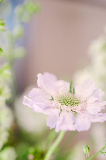 delicate lilac flower by moss and stone