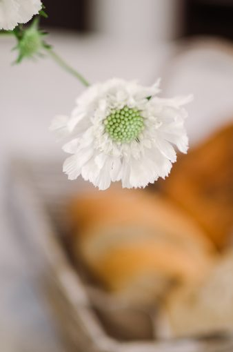 white cheerful flower