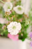 delicate white flower by moss and stone