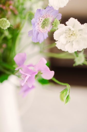 delicate sweetpea flowers in lilac