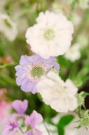white and lilac flowers by moss and stone