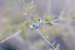 Michelle's beautiful engagement ring placed on the branch of a tree