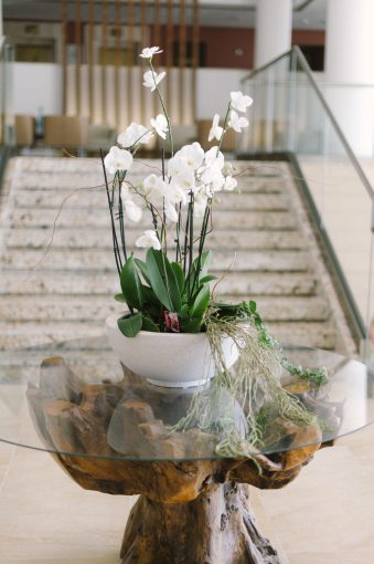 orchid display in the recpetion of the hotel