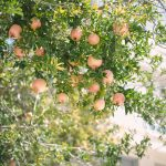 fruit trees laden with fruit