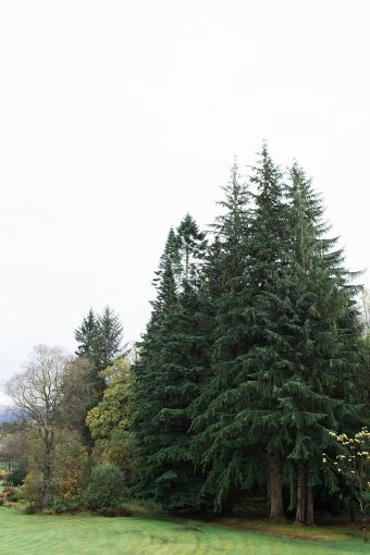 tall pine trees in the grounds