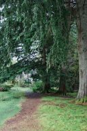 tree lined path for walks