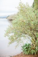 trees by the waters side