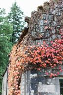 red and golden ivy climbing up the outside of the hotel