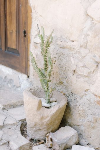 sandstone wall with a plant