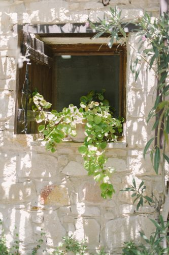 window with a plaint trailing romantically from the windowsill