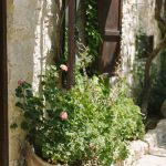plants decorating the courtyard