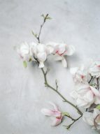 branches of pink magnolia flowers