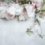 blossoming petals of pink magnolia used as wedding florals