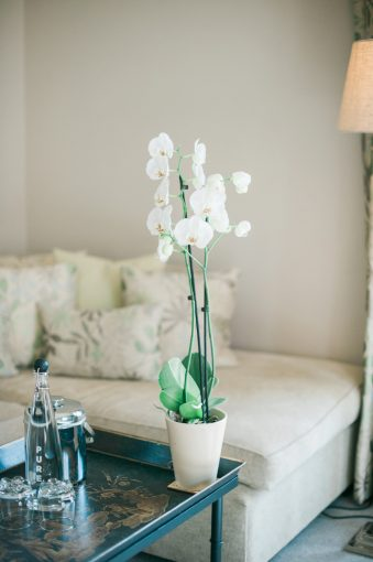 orchid plant on a coffee table