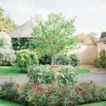 gardens with red roses and tree