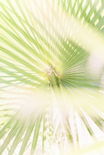 sunlight streaming through the leaves of a huge palm tree leaf
