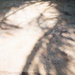 shaddows of palm tree leaves on the stone floor