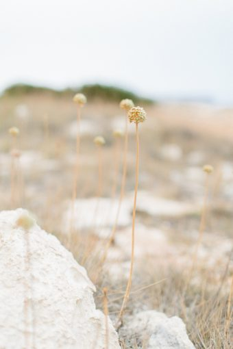 details of the foliage along the coastline of Menorca