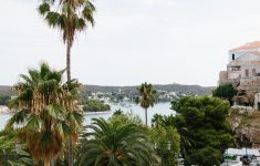 glimpse trough the tall palm trees to see the sea and harbour in Menorca
