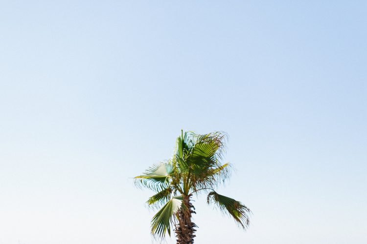 tall palm tree top against clear blue sky
