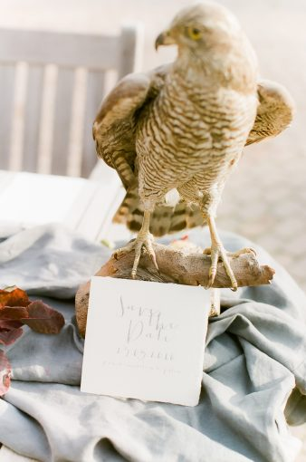 hawk on display with calligraphy staitionery