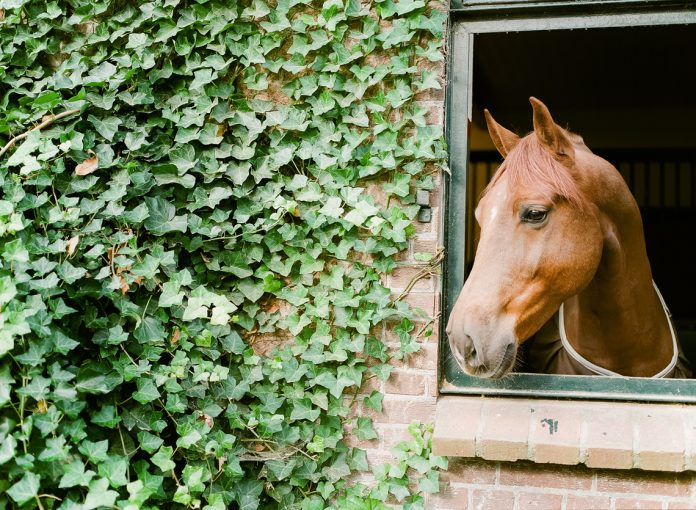 horse peeping through the stable door