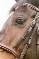 details of a horses face and eye