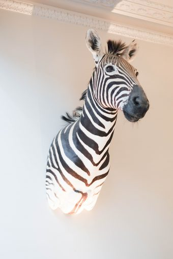 Casa Botelho wall mounted zebra head