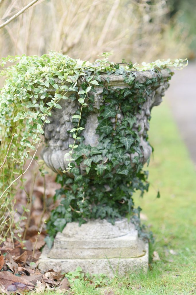 stately home garden urn with ivy