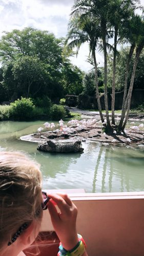 disney animal kingdom tips and must sees
